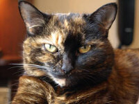 Click to read the story of an old and grumpy rescue cat!