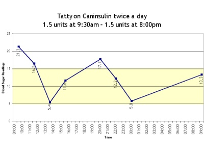 Tatty on Caninsulin again, but at a different dosage level than before.